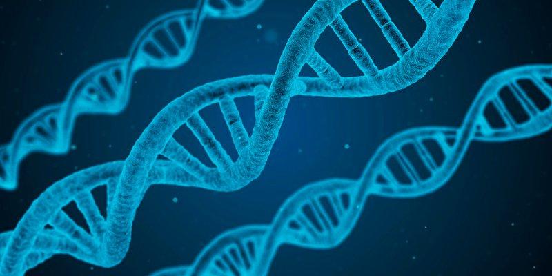 Страховщики жизни во Флориде не смогут изучать генетическую наследственность потенциальных клиентов
